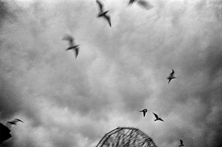 Birds flying past the wonder wheel.